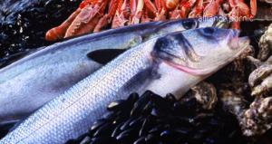 dietetique-poisson-sauce-picada