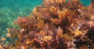 Tout savoir sur les algues