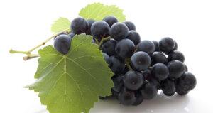 Propriétés bénéfiques du resvératrol dans le raisin