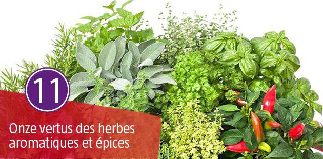 Les 11 Vertus des Herbes Aromatiques et Epices