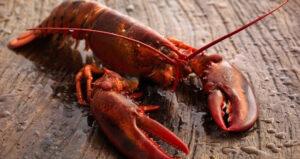 Crumble de homard épicé aux fruits frais et secs