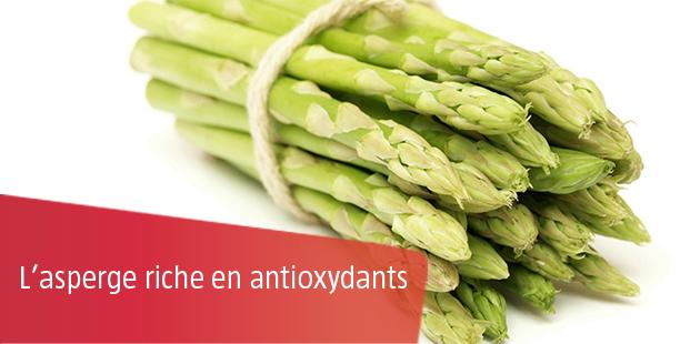 L'asperge riche en antioxydants
